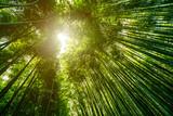 The Arashiyama Bamboo grove, Bamboo garden japanese style, Kyoto, JAPAN. - 183643514