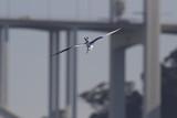 Tern dive flight - 183650590