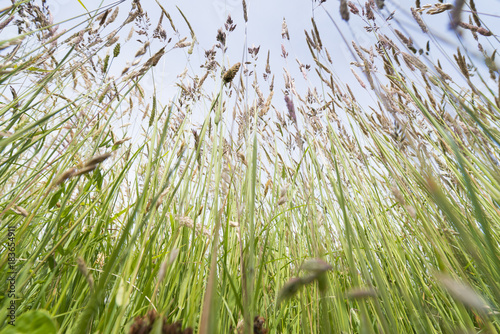 Meadow sfotografowany z trawy z perspektywy żaby.