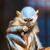 Affe in blau - 183671589