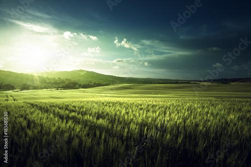 Plexiglas Lente Green field of wheat in Tuscany, Italy