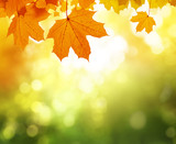 leaves in autumn forest - 183681733