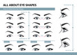 How to determine Eye Shape. Various types of female eyes. Set of vector illustrations with captions. Template for Makeup. Training poster
