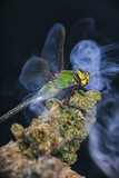 Macro detail of dragonfly sitting on cannabis nug with smoke rings - 183704747