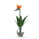 Bird of Paradise Flower in Glass Vase on a white. 3D illustration - 183706947