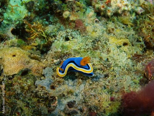 True sea slug Poster