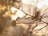 squirrel on branch reaching for a pine cone