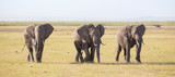 Herd of lephants at Amboseli National Park, formerly Maasai Amboseli Game Reserve, is in Kajiado District, Rift Valley Province in Kenya. The ecosystem that spreads across the Kenya-Tanzania border. - 183715321