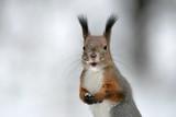 squirrel - 183727724
