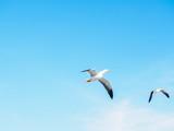 Seagull Flight Against Summer Sky - 183728107