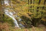 Beech forest - 183729990