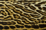 exotic feline fur texture background - 183731547