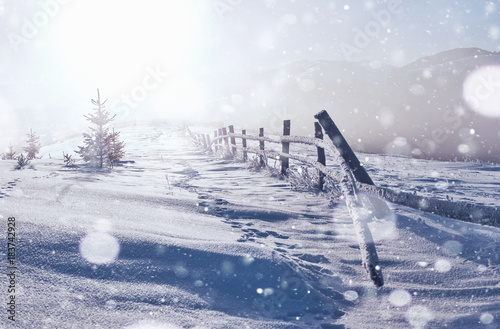 Plexiglas Wit winter landscape trees and fence in hoarfrost, background with some soft highlights and snow flakes. Happy New Year