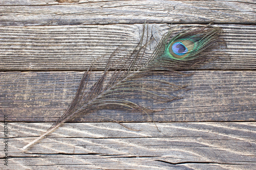 Plexiglas Pauw Peacock feather on wooden background