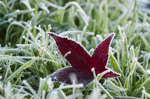 Foto op Canvas Natuur leaf covered with hoarfrost, the first days of winter