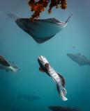 Sea aquarium in Alesund Norway - 183749724
