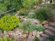 Leinwanddruck Bild - Steingarten, Steppenwolfsmilch, Euphorbia, seguieriana