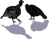 two turkey with shadows isolated on white - 183754357