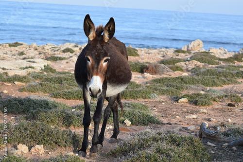 Plexiglas Paarden Wild donkey on the nature