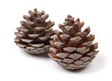 Beautiful pine cones - 183759585