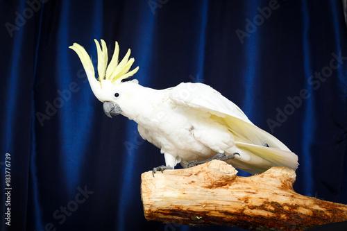 Fotobehang Papegaai white parrot Cockatoo bird
