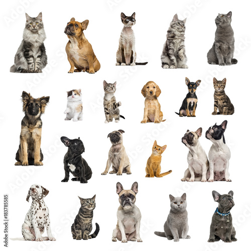 Large collection of 10 dogs and 10 cats in different position Poster