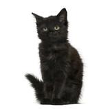 Black cat kitten sitting, isolated on white