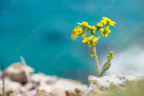 blooming flowers in a spring field - selective focus
