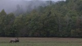 Wide shot of elk in NC mountains - 183808359