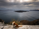 Sunset on Santorini through the eyes of a local cat. Greece. - 183810987