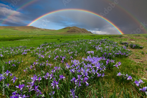 Fotobehang Iris Mountain landscape with a rainbow over flowers
