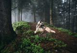 Dog in a mystical forest. Dog walking outdoors in a forest. - 183818522