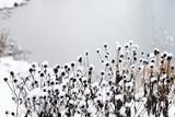 Blumen im Winter Bei Schnee Und Frost - 183819145