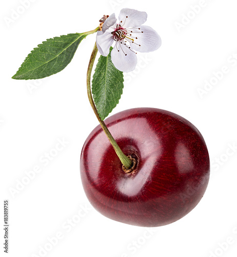 Fotobehang Kersen Fresh cherry with leaf and flower isolated on white background with clipping path