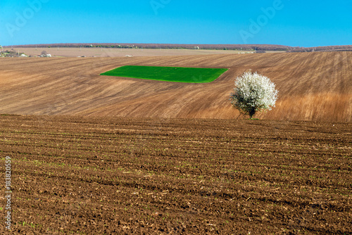 Idyllic rural view of farmland and blossoming tree in the spring - selective focus, copy space