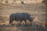 Rhino - 183831109