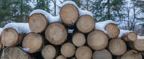 Tuinposter Brandhout textuur Panorama Holzstapel im Wald