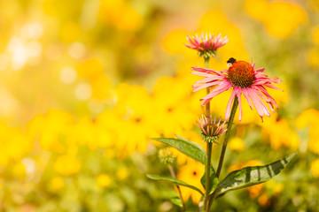 Detailed closeup of pink daisy flower