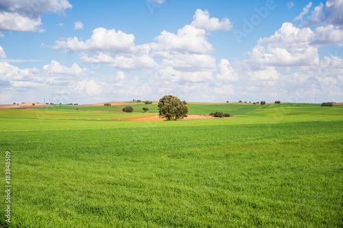 Poster Pistache Alegre paisaje colorido con gran árbol