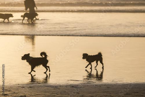 Plexiglas Strand Two Dogs at Dog Beach in Del Mar, California