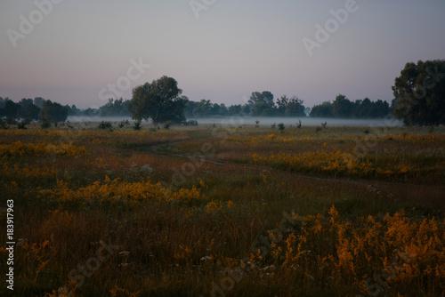 Papiers peints Marron chocolat sunrise, sun, road, forest, dew, moss, grass, greens, landscape, panorama