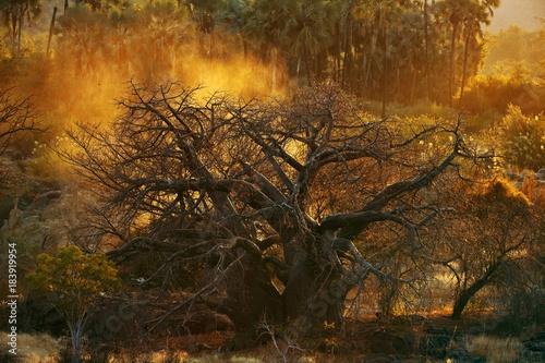 Fotobehang Baobab baobab