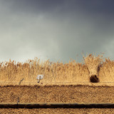 Thatched Roof with Straw, reed and tools - 183922547