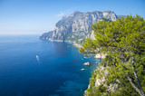 Dramatic scenic overlook through Mediterranean pine trees to a view of the iconic cliffs of the island of Capri, Italy - 183927509