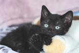 Młody piękny kot kotek patrzy uroczo