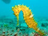 Seahorse - 183932535