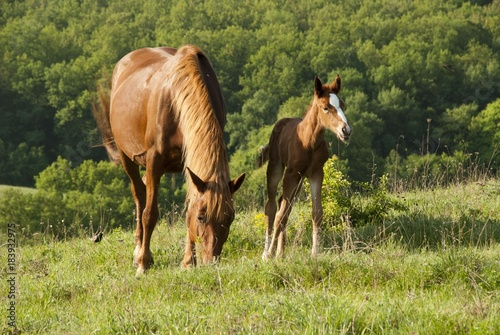 Plexiglas Paarden horse