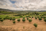 Beautiful scenery of the Portuguese countryside. The valley of the river Duero. Portugal. - 183951386