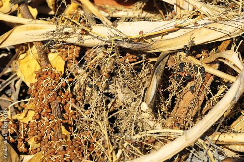 Foto op Aluminium Gras Brown Dry Grass Herb Texture