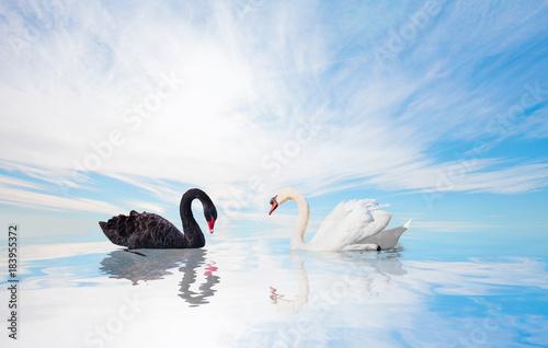 Plexiglas Zwaan Black and White swan with reflection on water